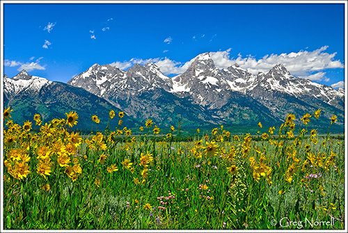 Teton Peaks and Flowers