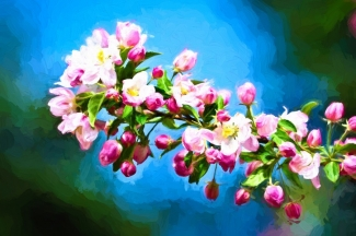 Spring Impressions