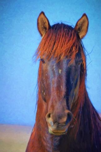 Wild Stallion Portrait