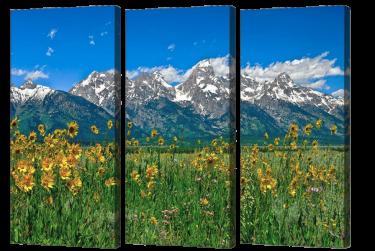 Teton Peaks & Flowers Triptych
