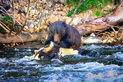 grizzlybear.jpg