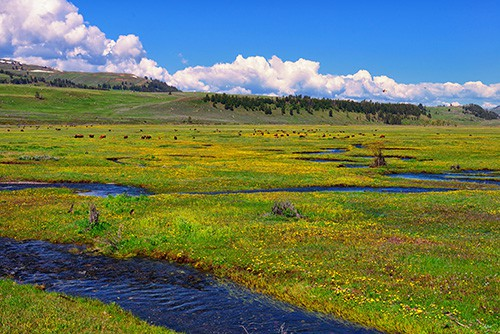 Springtime in the Lamar Valley of Yellowstone National Park