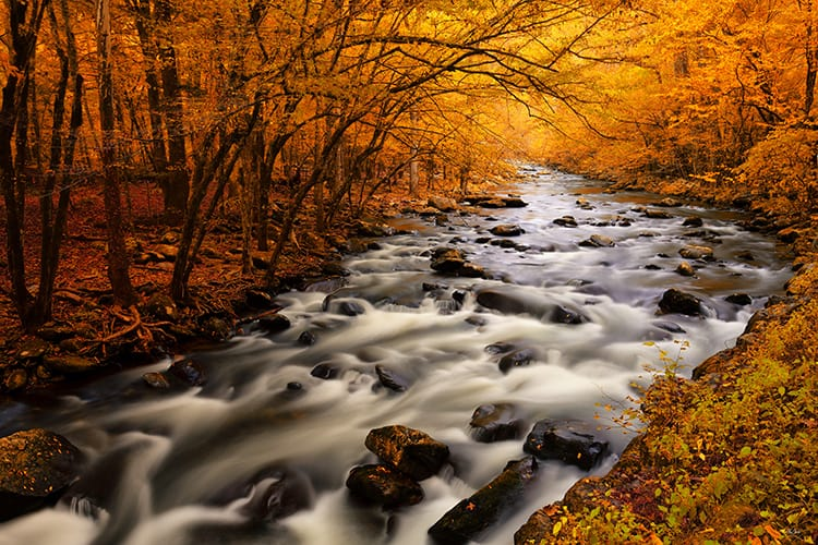 Peak autumn foliage along the Little River in the Great Smoky Mountains National Park