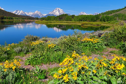 Spring at Oxbow Bend in Grand Teton National Park