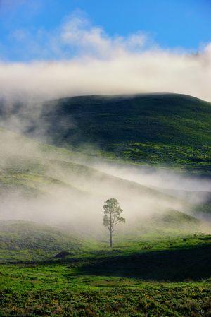 Misty-Morning.jpg