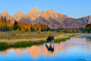Schwabacher-Morning.jpg
