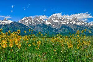 Tetons-Peaks-and-Flowers.jpg