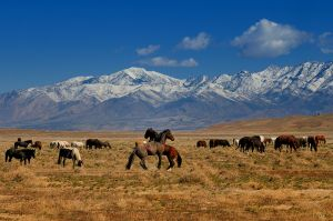 Onaqui-wild-horses.jpg