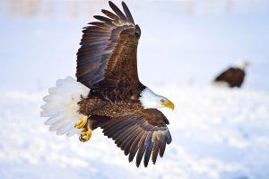 eagle-landing.jpg