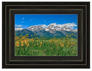 Tetons Peaks and Flowers Framed Print